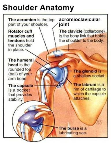 Acknowledging the Acromioclavicular joint