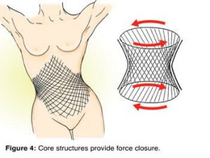 Force closure stability is generated by contractive action of core musculofascial tissues, such as the pelvic diaphragm, transverse abdominis, multifidus, and thoracolumbar fascia (Fig.4).
