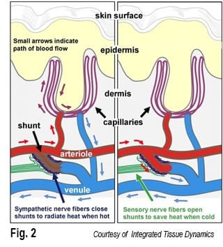 Fig. 2: Courtesy of Integrated Tissue Dynamics