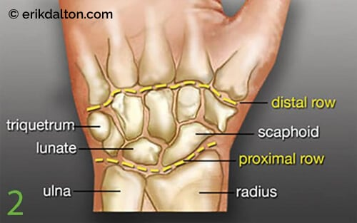Image 2: The proximal carpal row includes the scaphoid, lunate, and triquetrum.