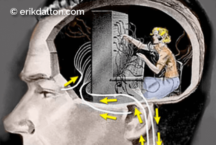 Image 1: The spinal cord as a hardwired switchboard to the brain. Adapted from Dreamstime.