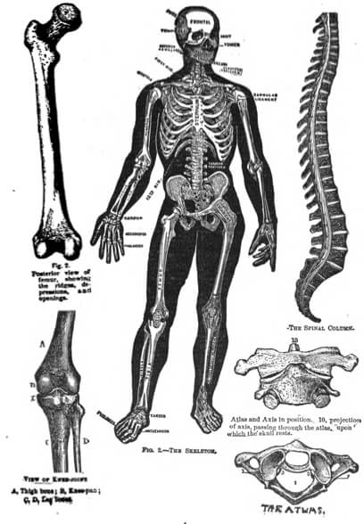 (1902) Columbia College of Osteopathy Home Study Course
