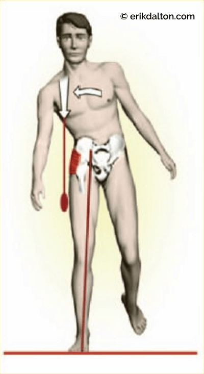Figure 5: In the normal walking cycle, the right gluteus medius/minimus must fire first to elevate the contralateral ilium (right pelvic side bending) so the left leg can swing through. Courtesy of Erik Dalton.