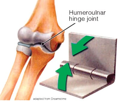 Image 1: The humeroulnar is the only true elbow hinge joint.