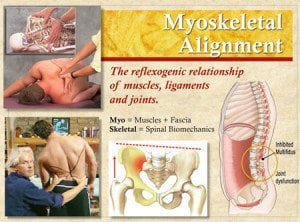 The reflexogenic relationship of muscles, ligaments, and joints.