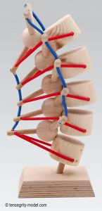 Image 2: A tent-like tensegrity arrangement acts as the spine's primary shock absorber.