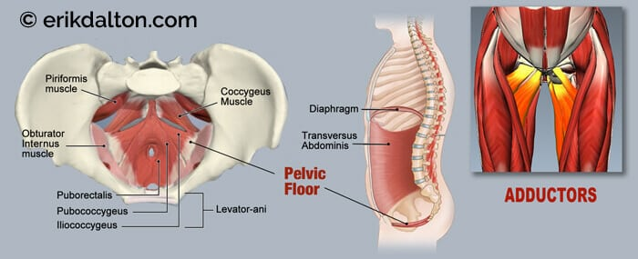 resembling a hammock or a sling this small ensemble of muscles and fascia support the bladder uterus prostate and rectum  evaluation of the pelvic floor     adductors pudendal nerve and pelvic floor pain   erik dalton blog  rh   erikdalton