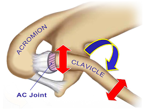 Figure 3: AC joint motion