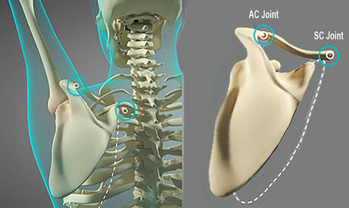 Figure 2 - relation of AC to SC joint
