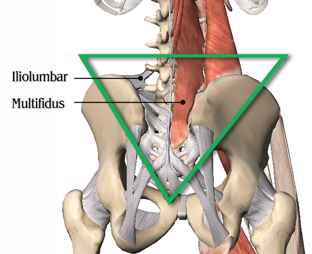 Image 1: Iliolumbar Ligament
