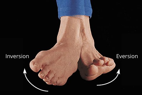 Feet demonstrating the direct of movement for inversion and eversion